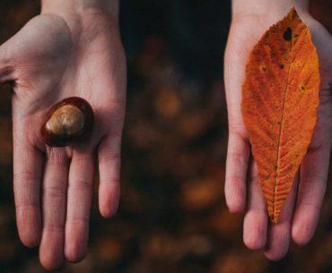 fase do outono